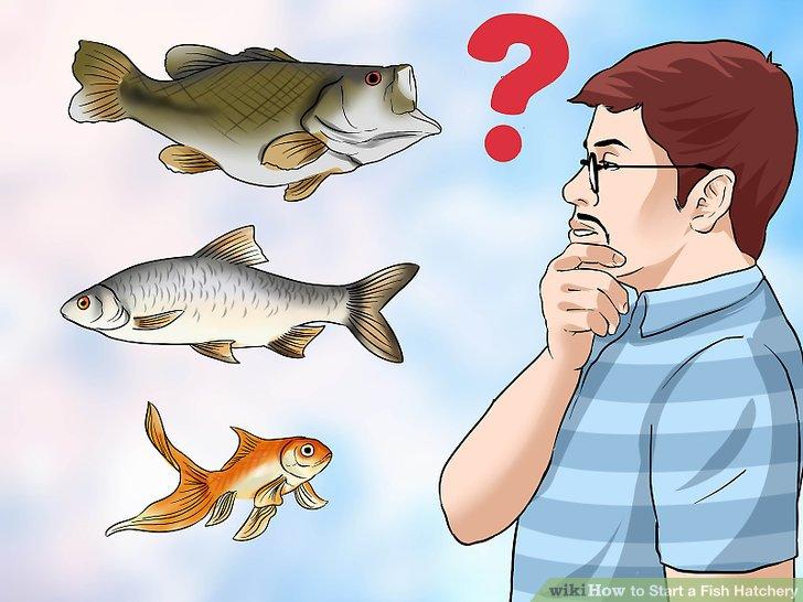 Entscheiden Sie, welche Fischart Sie anheben möchten.