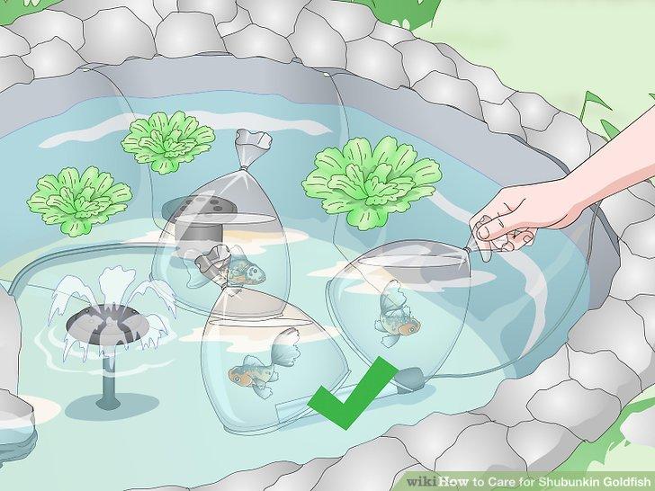 Tauschen Sie ein- bis zweimal pro Woche 25% des Teichwassers aus.
