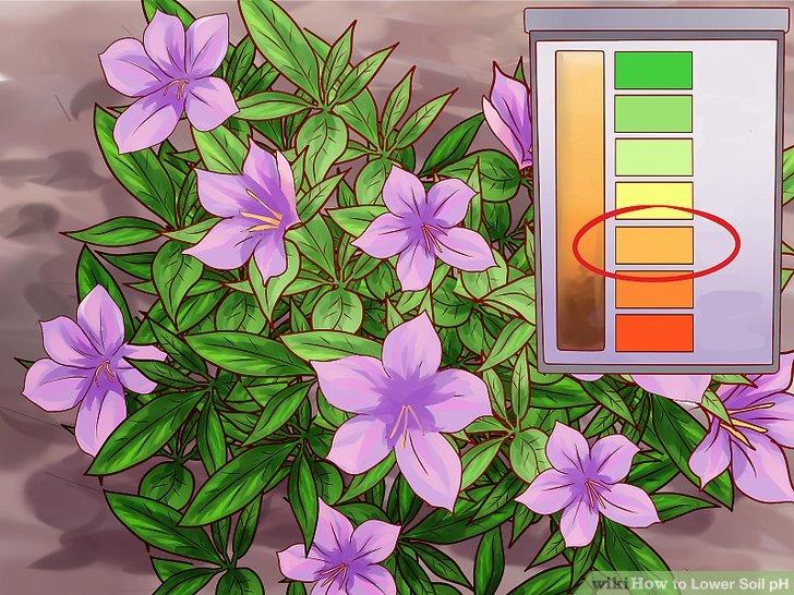 Niedriger pH-Wert für Sträucher wie Rhododendren und Azaleen.