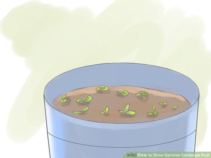 Halten Sie die Samenaufnahmemischung feucht und warm.