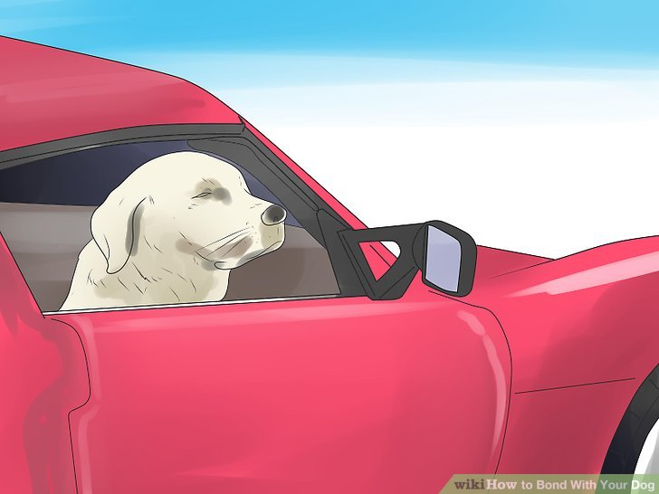 Go on a road trip with your dog.