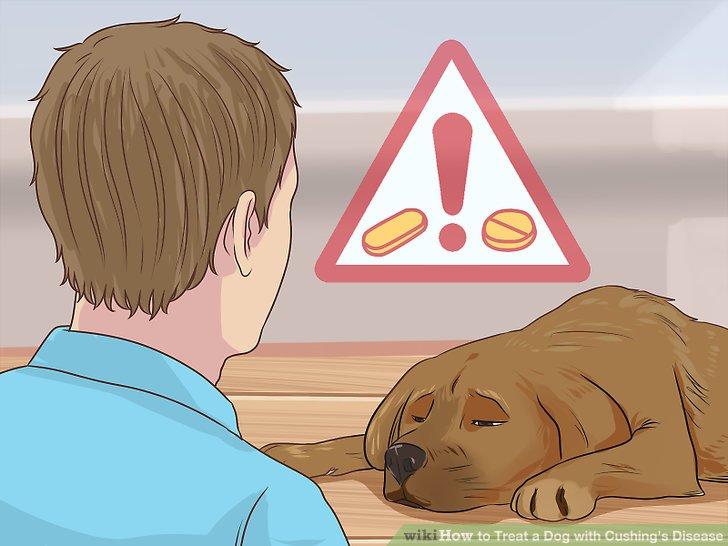 Überwachen Sie Ihren Hund auf Nebenwirkungen.