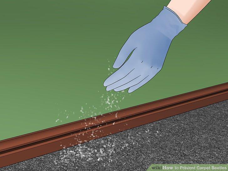 Besprühen Sie Ihren Teppich und Ihre Möbel mit einem Insektizid.