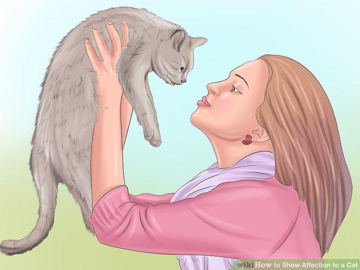 Seien Sie für Ihre Katze verfügbar.