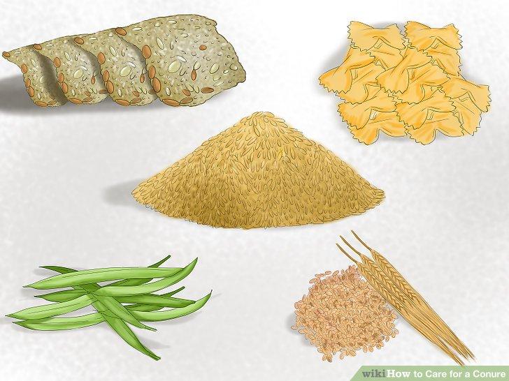 Geben Sie Ihre Conure-Körner und Hülsenfrüchte zu essen.