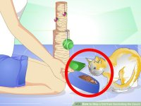 How to Stop a Cat from Scratching a Leather Sofa: 12 Steps