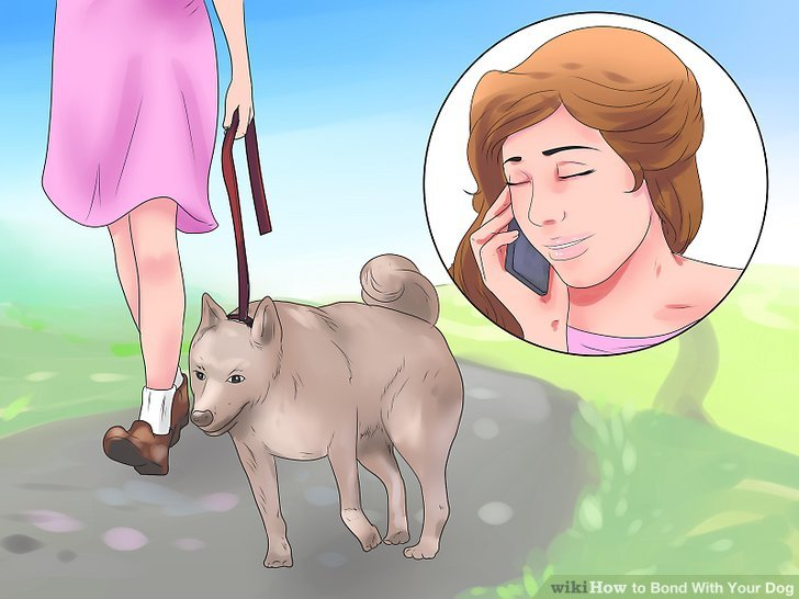 Give your dog your attention when you go on walks.