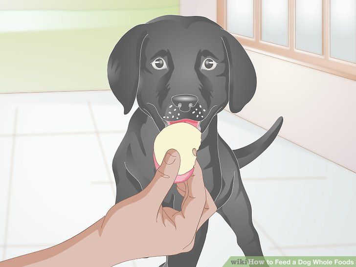 Geben Sie Ihrem Hund Obst und Gemüse als Zwischenmahlzeit.