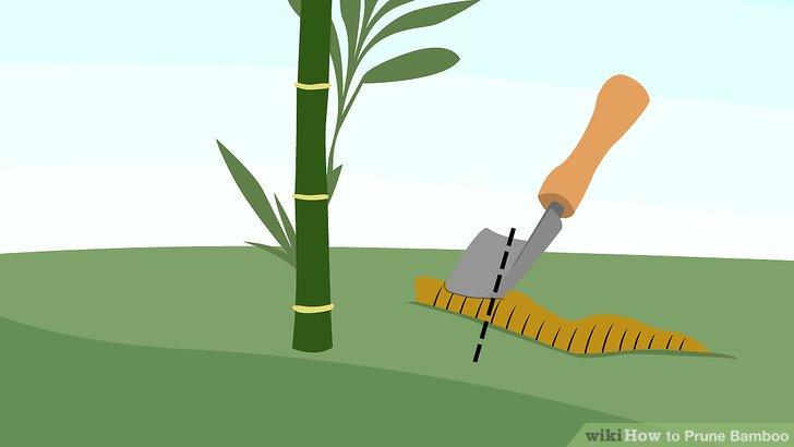 Schneiden Sie über einem Knoten, wenn Sie versuchen, die Höhe zu reduzieren.