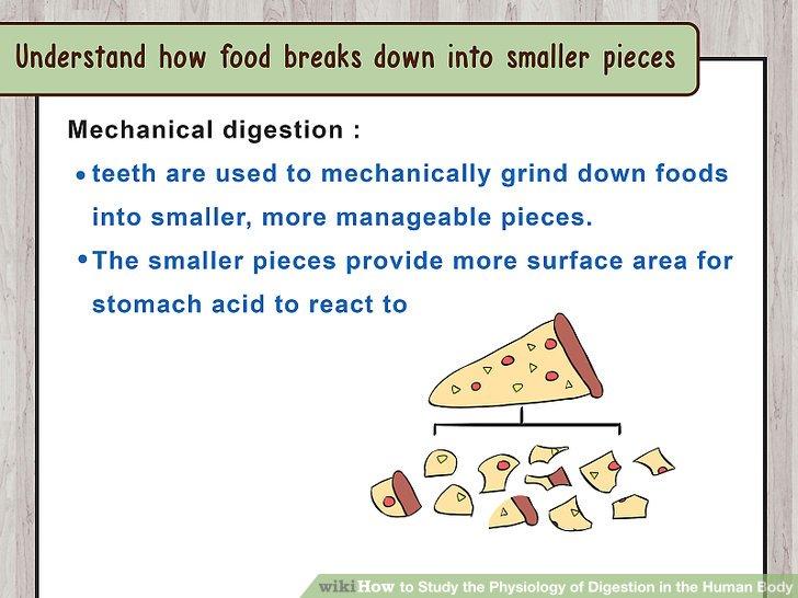 Verstehen, wie Lebensmittel in kleinere Stücke zerfallen.