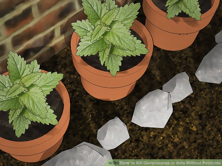 Plant mint around your home.