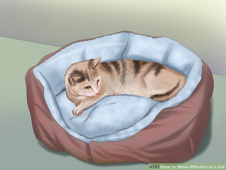 Bieten Sie Ihrer Katze persönlichen Raum.