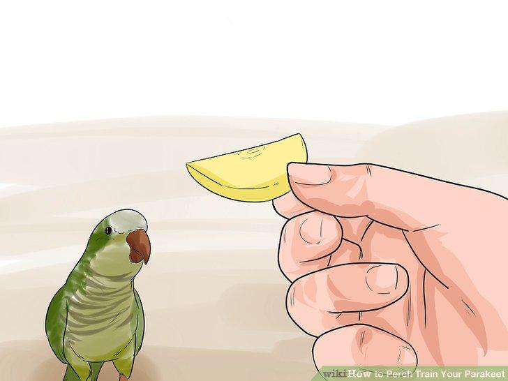 Verlocken Sie Ihren Vogel nach Bedarf mit Leckereien.
