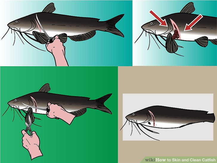 How to Skin and Clean Catfish 8 Steps with Pictures