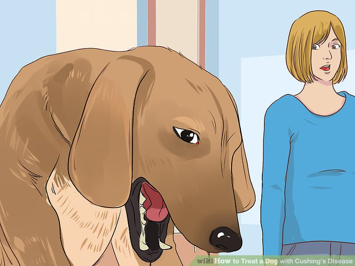 Beobachten Sie Ihren Hund auf Nebenwirkungen von Trilostan.