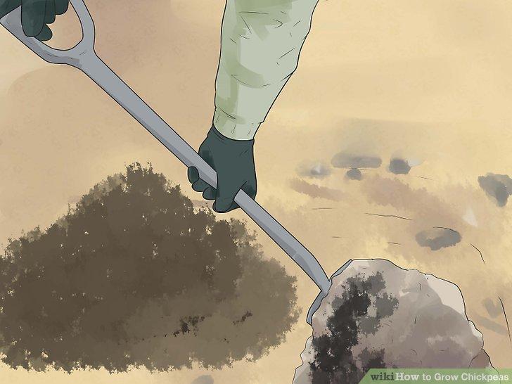 Prepare the soil.