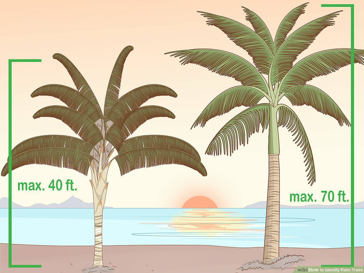 hight resolution of 2 easy ways to identify palm trees with pictures diagram palm tree trunk