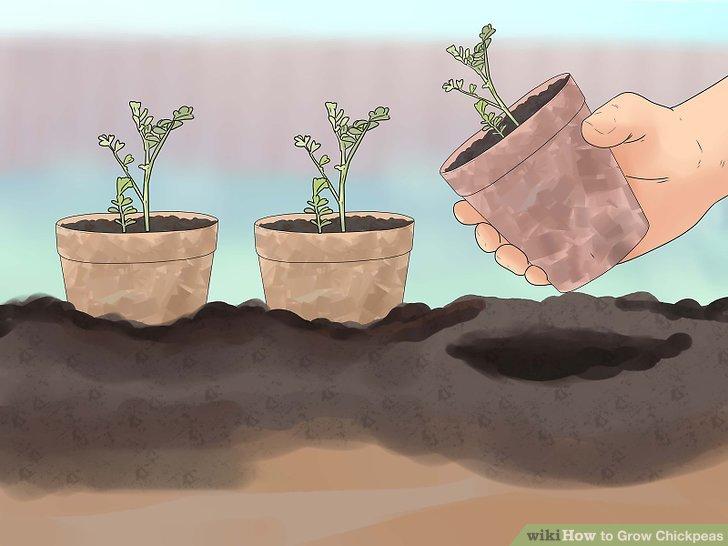 Keep the seedlings close.