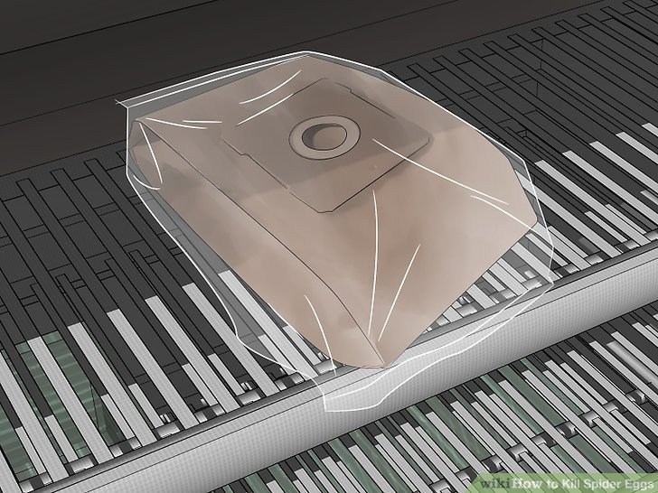 how to kill spider eggs