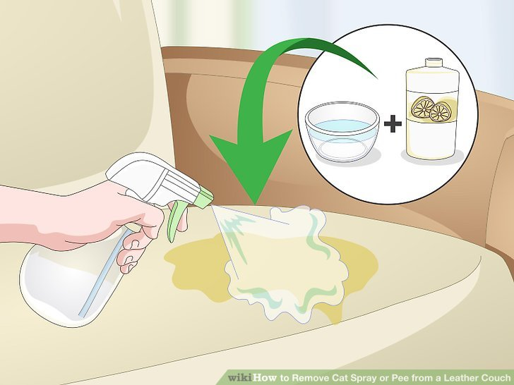 cat urine on leather sofa showrooms west london how to remove spray or pee from a couch: 7 steps