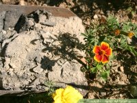 How to Use Fireplace Ash for Gardening: 7 Steps (with ...