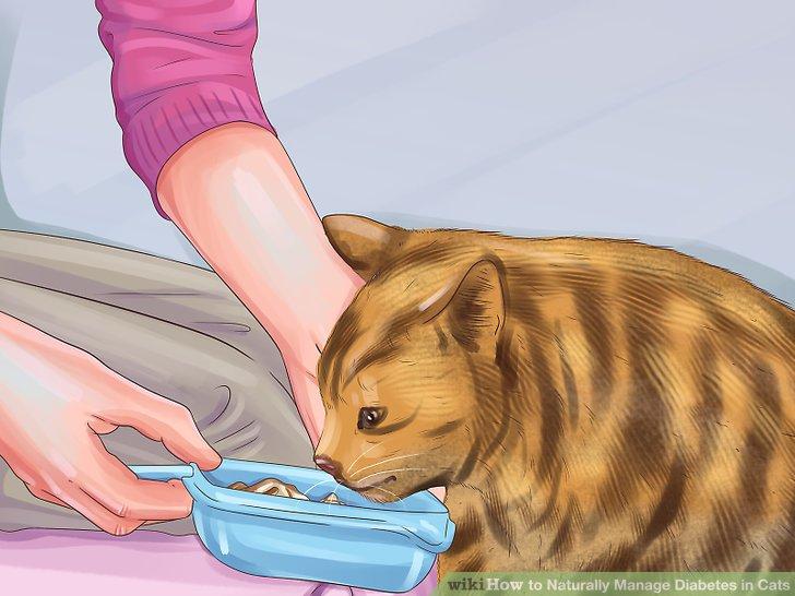 Füttern Sie Ihre Katze mit einer speziellen Diät.