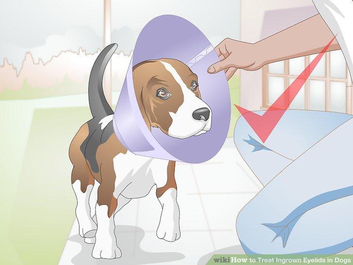 Halten Sie Ihren Hund nach der Operation in einem Kegel.
