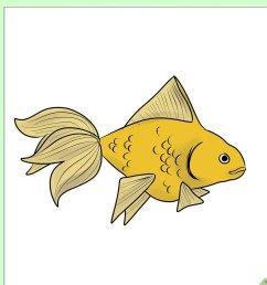 diagram of goldfish [ 1200 x 900 Pixel ]
