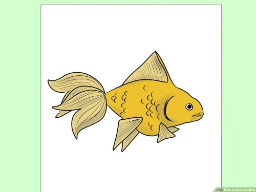 small resolution of diagram of goldfish