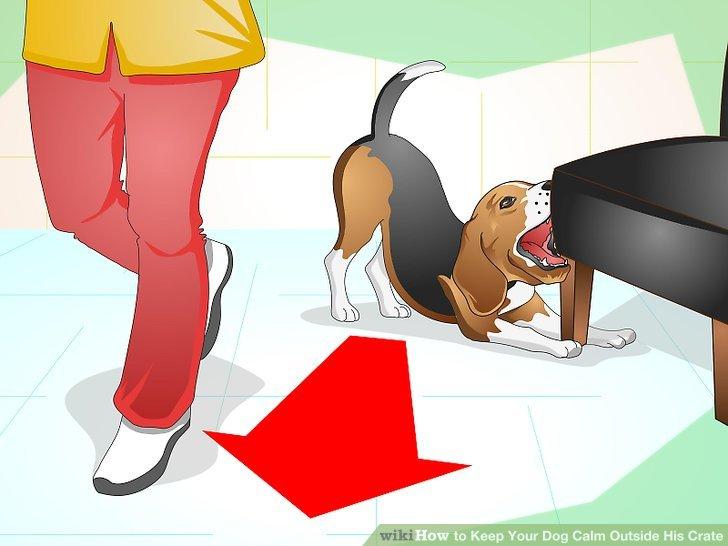 Ignorieren Sie das schlechte Verhalten Ihres Hundes.