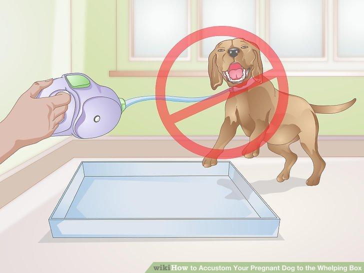 Köpeğinizi kutuya zorlamaktan kaçının.