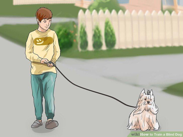 Trainieren Sie Ihren Hund wie gewohnt.