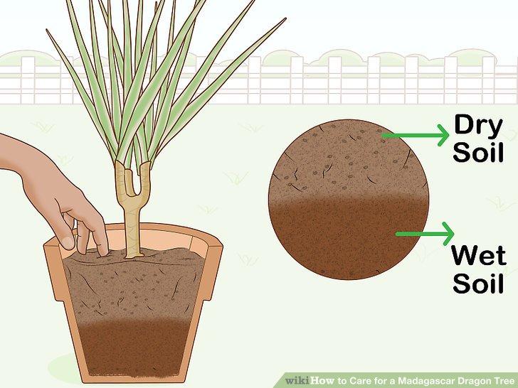 Wässern Sie erst, wenn die Oberseite des Bodens ausgetrocknet ist.