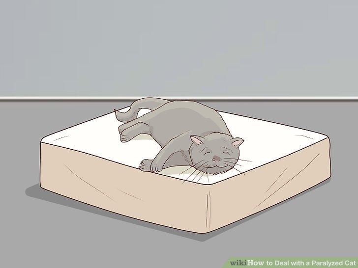 Holen Sie sich ein orthopädisches Bett für Ihre Katze.