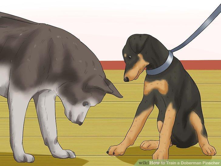 3 ways to train