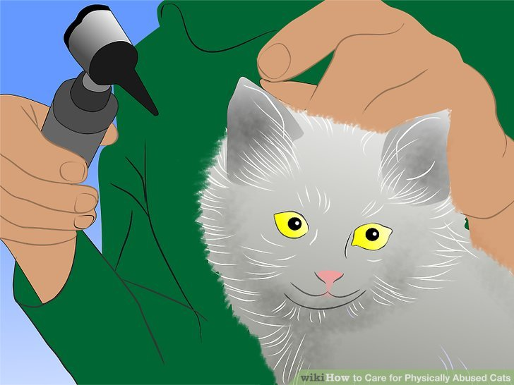 Get the cat checked out by a vet as soon as you bring her home.