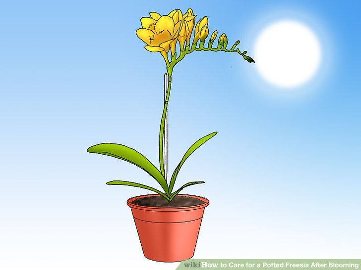 Stelle die Pflanze in die Sonne.
