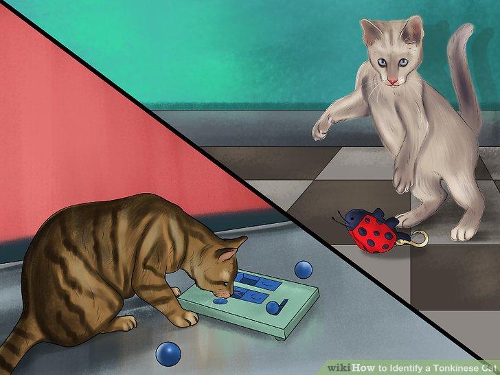Stellen Sie sicher, dass Sie eine aktive Katze haben.