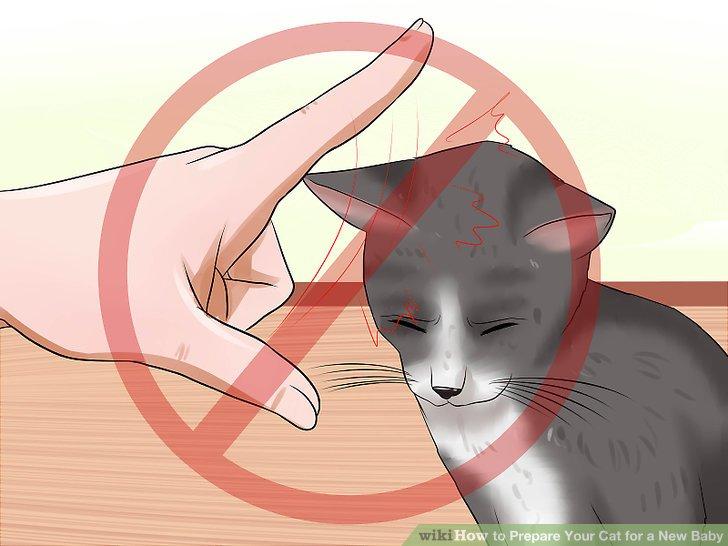 Vermeiden Sie es, Ihre Katze unter Druck zu setzen, um das Baby zu treffen.