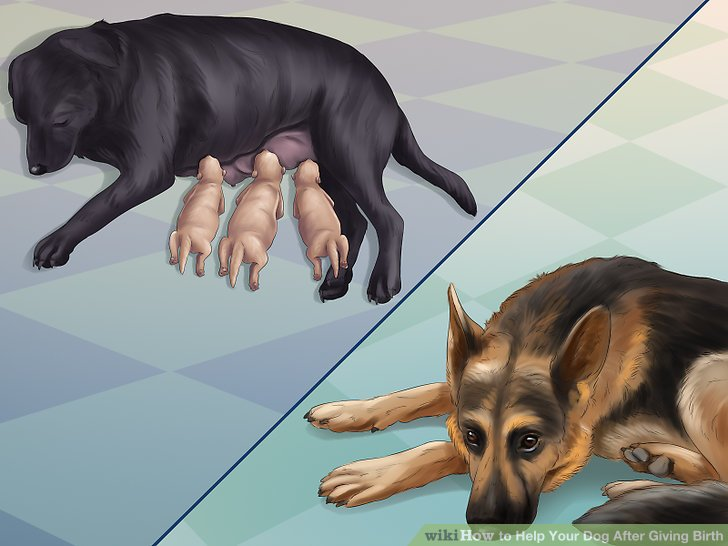 Keep other dogs away from the mother and puppies.