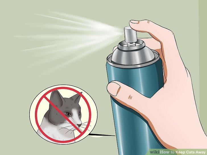 Tragen Sie kommerzielle Katzenschutzmittel auf.