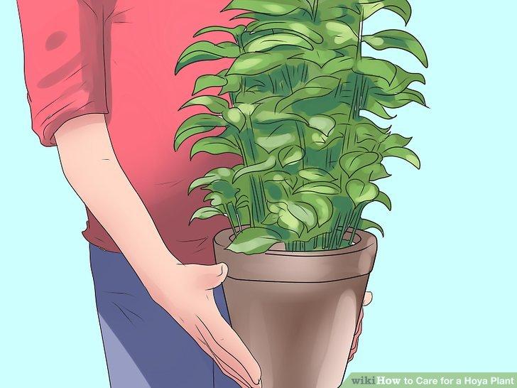 Bewegen Sie Ihre ältere Pflanze, wenn sie nicht mehr so viel blüht.