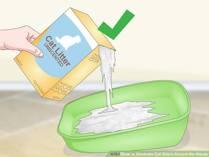 Use unscented litter.