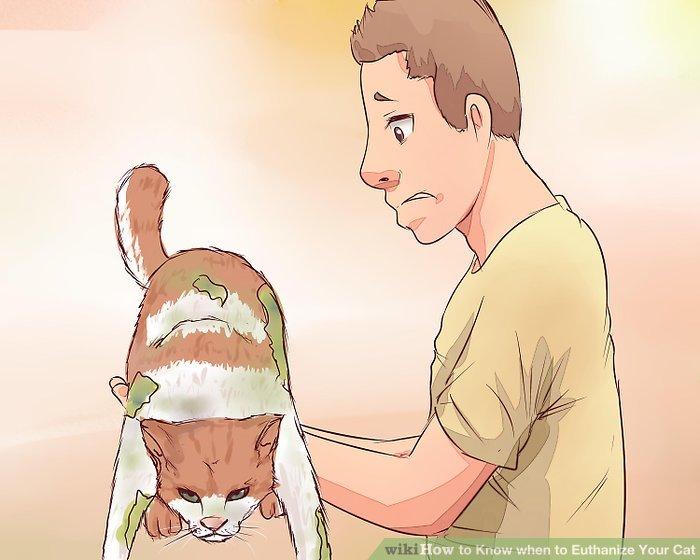 Beachten Sie, wenn Ihre Katze anfängt, sich selbst zu verschmutzen.