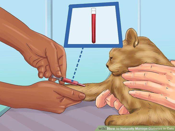 Testen Sie den Blutzucker Ihrer Katze.