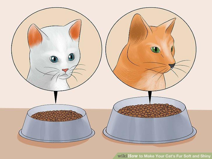 Ändern Sie bei Bedarf das Futter Ihrer Katze.