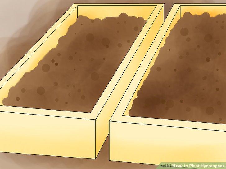 Prepare rich, porous soil.