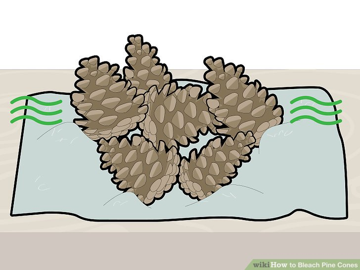 Place the pine cones on a surface to dry.