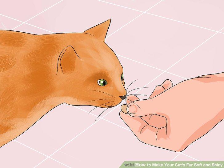 Gib deiner Katze etwas Gutes.