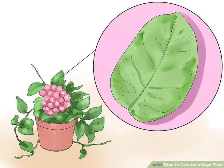 Passen Sie die Häufigkeit der Fütterung Ihrer Pflanze an den Gesundheitszustand der Pflanze an.